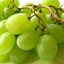 Grape Seed Oil - Vitis Vinifera