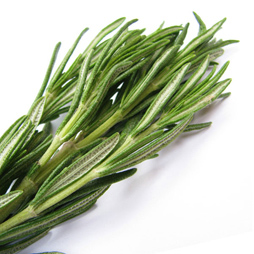Rosemary Oil – Rosmarinus Officinalis